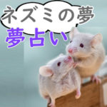 【夢占い】ネズミの夢|白・黒・大量発生・噛まれるなど宝くじ運と妊娠に関する意味を解釈