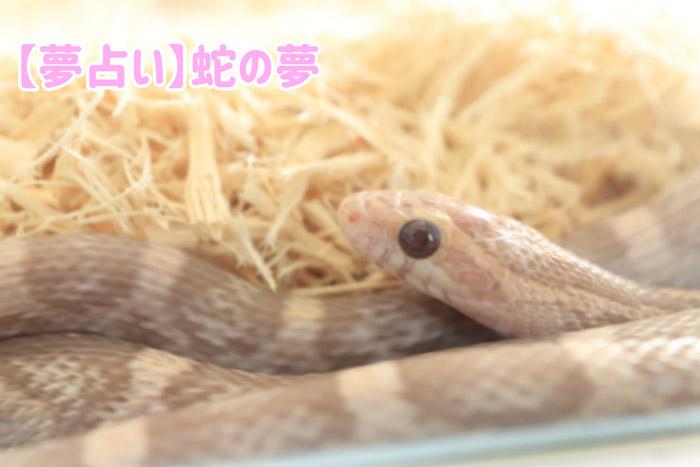 【夢占い】蛇の夢|宝くじや蛇に噛まれる・白・黒・赤・青やうじゃうじゃいるなど意味一覧