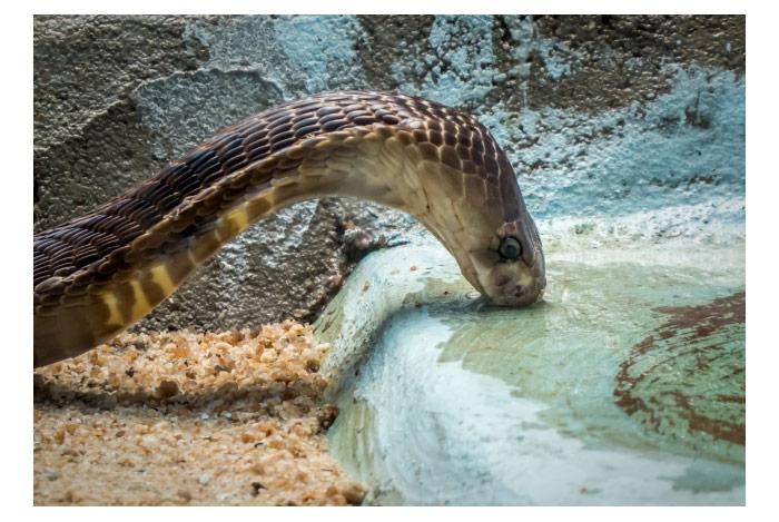 蛇に追いかけられる・蛇から逃げる夢・蛇に襲われる・蛇に噛まれる夢などの夢占い