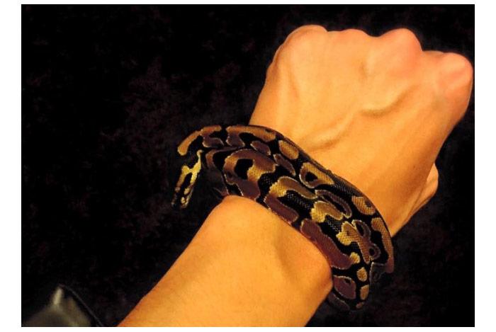 夢占い・蛇が巻きつく夢