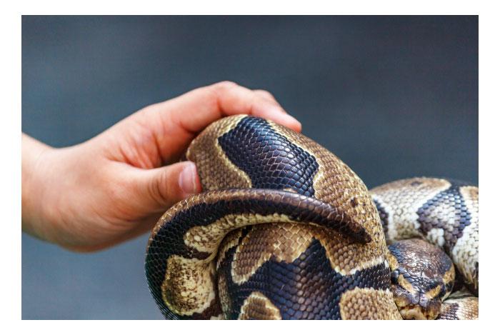 蛇の夢のネガティブな意味