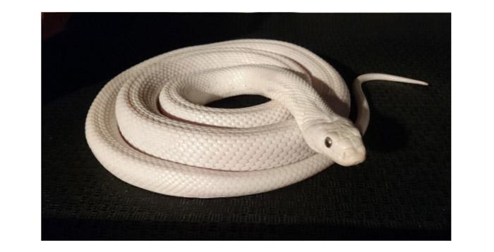 白蛇の夢と夢占いでの意味