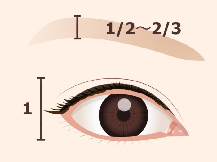 眉毛と目の比率