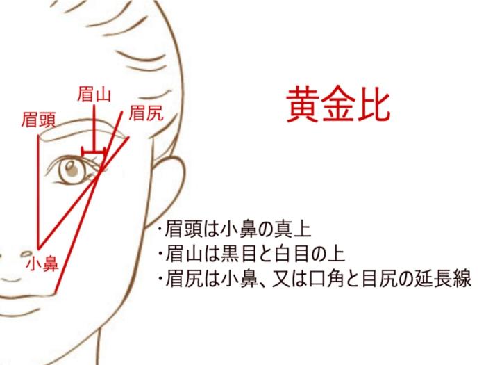 眉毛の黄金比