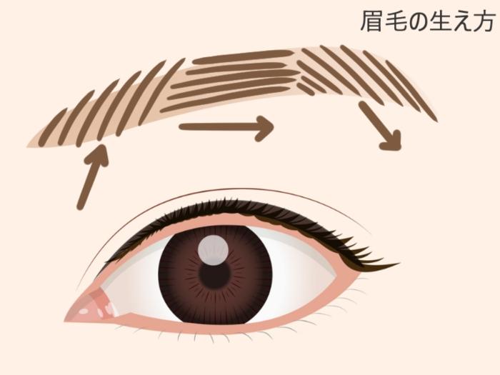 眉毛の流れ